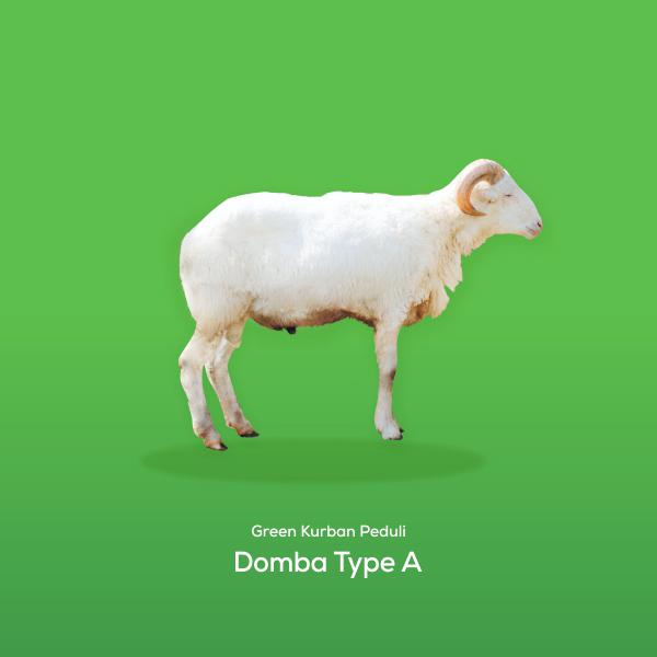 Green Kurban Peduli | Domba Type A