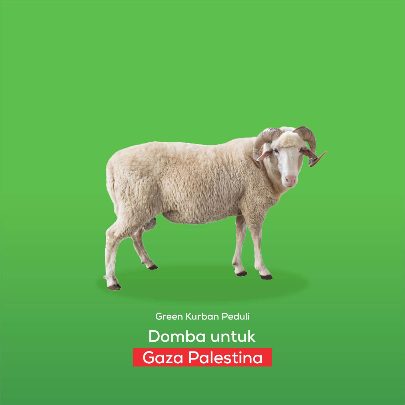 Green Kurban Peduli | Domba Gaza