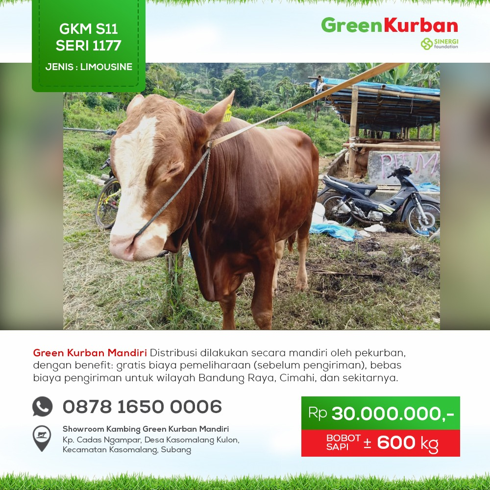 Green Kurban Mandiri | GKMS#1177