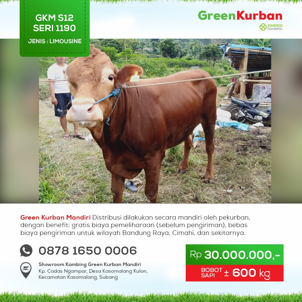 Green Kurban Mandiri | GKMS#1190