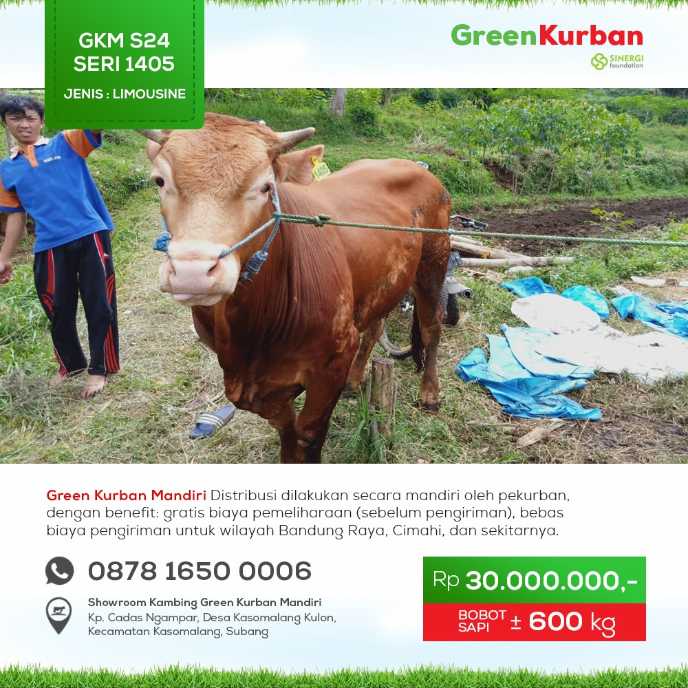 Green Kurban Mandiri | GKMS#1405