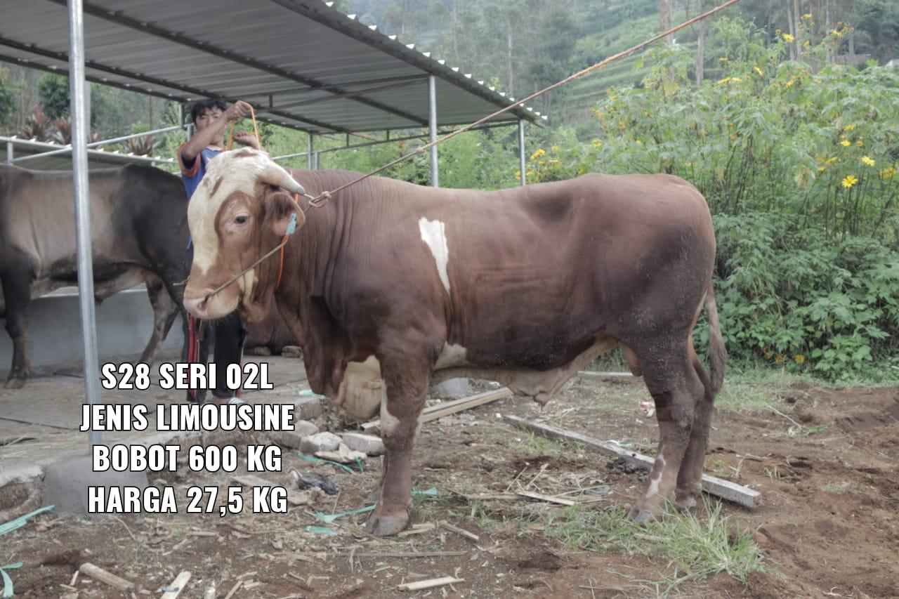 Green Kurban Mandiri | GKMS#S28-02L