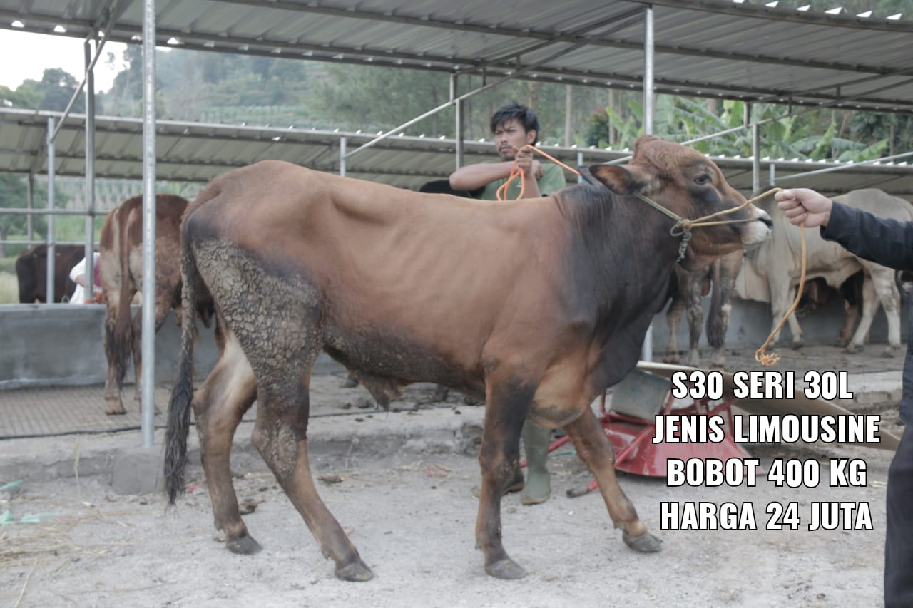 Green Kurban Mandiri | GKMS#S30-30L
